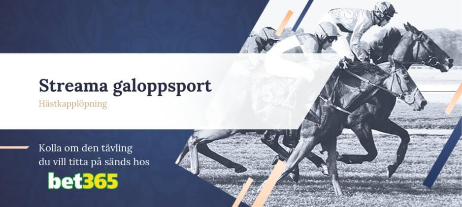 Galoppsport streaming bet365