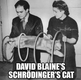 David blaine and cat memes