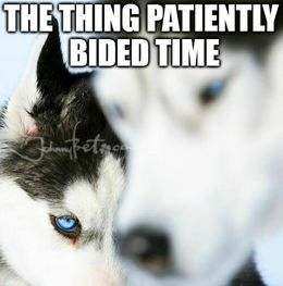 Patiently bided its time memes