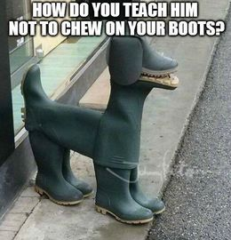 Chew on your boots memes