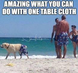 Table cloth memes