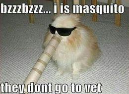 Doggo or mosquito