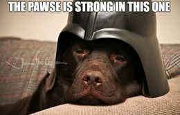 Darth vader dog memes