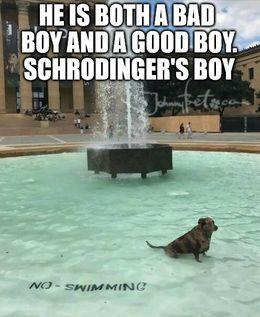 Good boy memes
