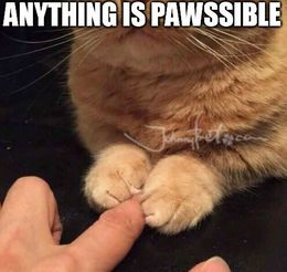 Dog paw memes
