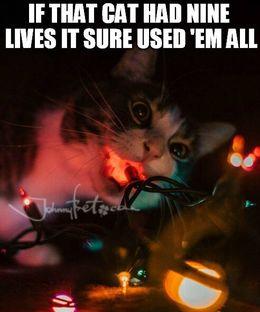 Nine lives memes