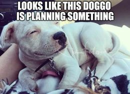 Planning something memes