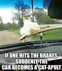 Hits the brakes memes