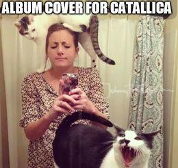 Album cover memes