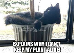 My plant memes