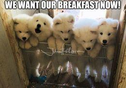 We want breakfast memes