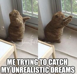 Unrealistic dreams memes
