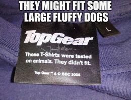 Fluffy dogs memes