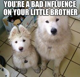 Your little brother memes