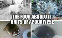 Apocalypse funny memes