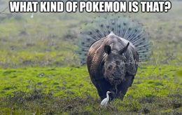 Pokemon funny memes