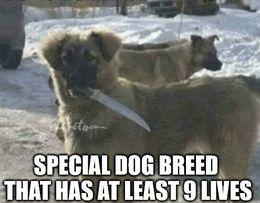 Dog breed memes