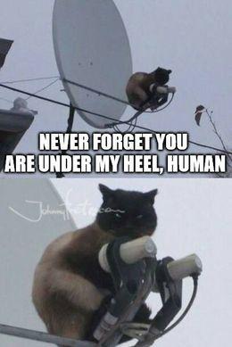 Under my heel memes