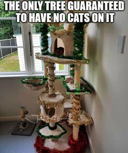 No cats memes