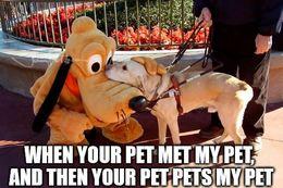 Your pet memes