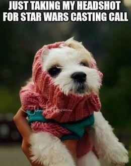 Casting call dog memes