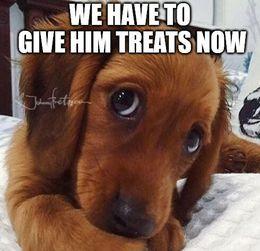 Give him treats memes