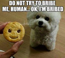 Bribe me funny memes