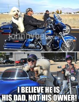His owner memes