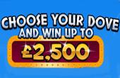 dove bingo bonus
